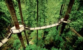 capilano-suspension-bridge-treetops-adventure