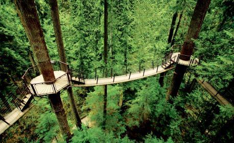 capilano-suspension-bridge-treetops-adventure